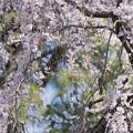 写真: 春来たれり