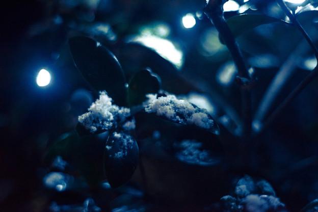 写真: 珍しく雪が降った