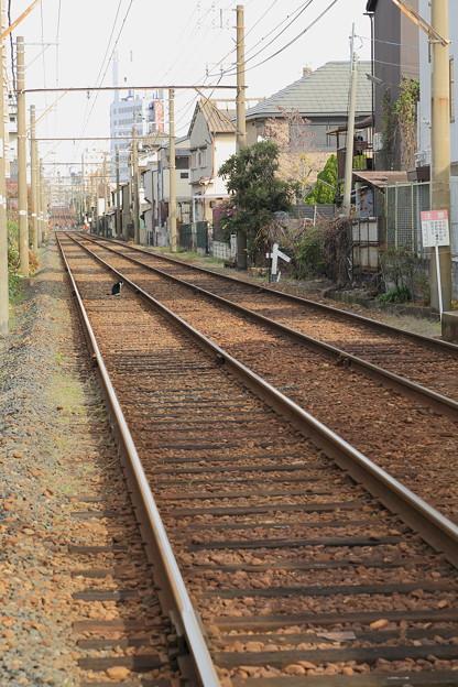 線路にたたずむ猫