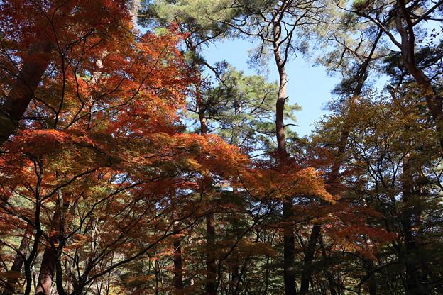 昇仙峡 紅葉2