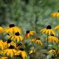 Photos: 夏の花壇