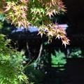 写真: 秋めいて