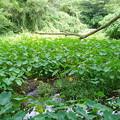 ペナン・大蛇が棲んでいそうなジャングル