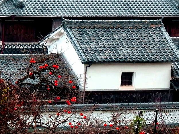 柿木と白壁の蔵