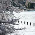 Photos: 花の池_15402