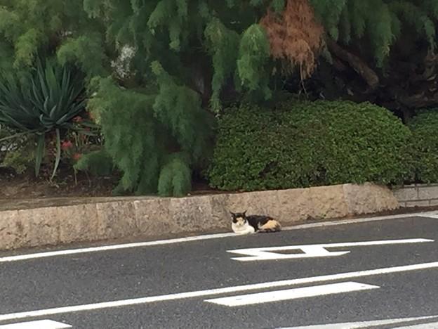 [20160926][間々田]タクシー待ち