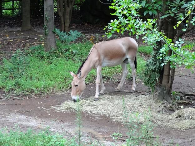 よこはま動物園ズーラシアDSC01891