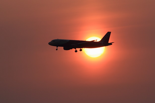 A320と夕陽
