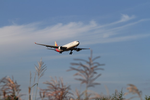 A330 チョット秋の気配 Asiana
