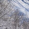凍りついた木々 1