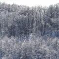 凍りついた木々 3