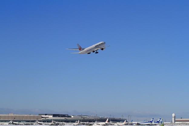 Photos: B777 JAL 快く晴れた空に