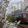 梅と阪急3300系