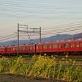 Photos: 夕陽を浴びる鮮魚列車