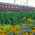 Photos: 夕方の鮮魚列車