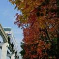 Photos: 紅葉と大阪モノレール
