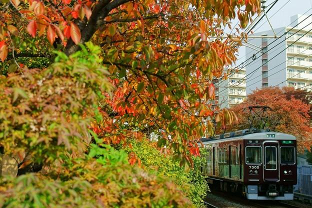 Photos: 阪急電車