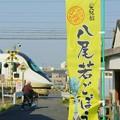 Photos: 八尾の特産「若ごぼう」