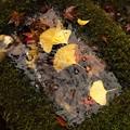 11-18小さい秋