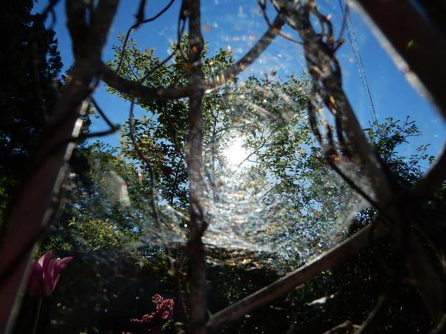 蜘蛛の巣にかかった太陽1