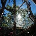 Photos: 蜘蛛の巣にかかった太陽1
