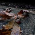 Photos: 小さい秋、見ぃつけた♪