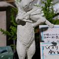 ウサギのバイオリン弾き(JPEG)