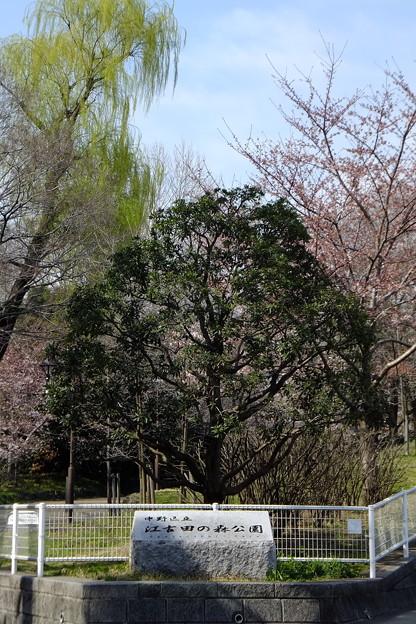 やがて江古田の森公園へ