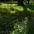 木洩れ日のスポットライト