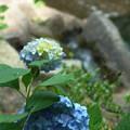 水辺に咲く 2