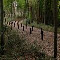 写真: フェンスの向こうにある路