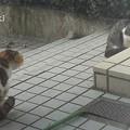 Photos: 02_01喧嘩