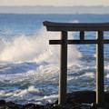 写真: 荒ぶる海を見つめ