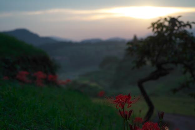 Photos: 夕暮れに咲く