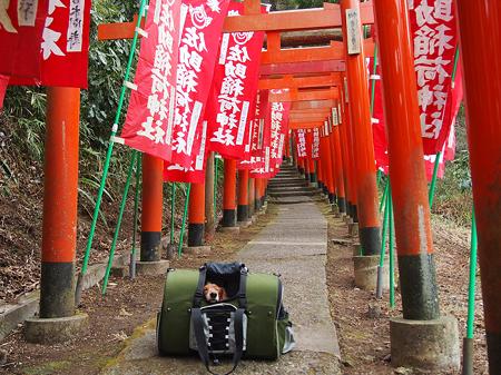 佐助稲荷神社2