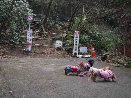 鎌倉源氏山へ登る山道
