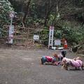 写真: 鎌倉源氏山へ登る山道