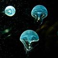 Photos: 深海の宇宙