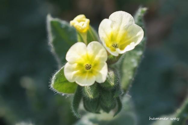 写真: 名もなき花