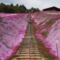 Photos: 東藻琴芝桜公園 150530 01