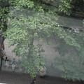 写真: 梅雨のひととき♪