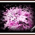 Photos: 「桜の花弁アート・・・」 ・・・・
