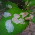 Photos: 「桜散る・・」・・・・