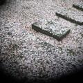Photos: 外は・・雪国だぁ~・・・・・