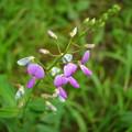 Photos: 「はぎの花」・・・・・