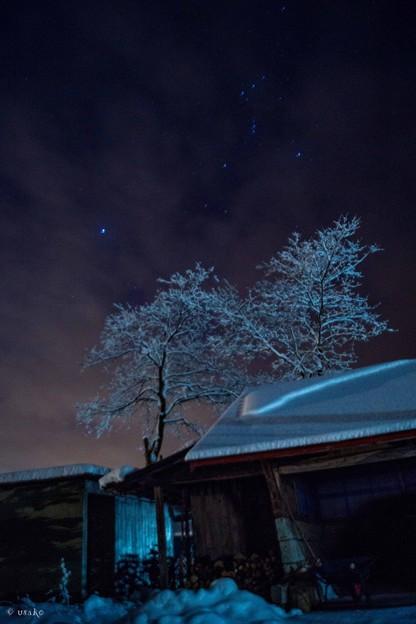 星と雪の華