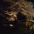 写真: 足利市鑁阿寺の夜桜?2015.4.2