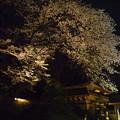 鑁阿寺の夜桜?2015.4.2