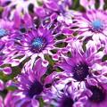 Photos: あなたは 宇宙の果ての花園に咲く花なのか ♪