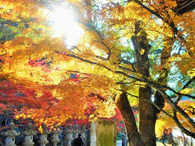 総門の秋 in 大本山仏通寺2016